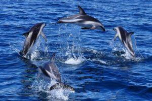 Delfines en Puerto Madryn 1