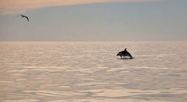 Delfines en Puerto Madryn